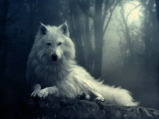 wolf-in-the-dark